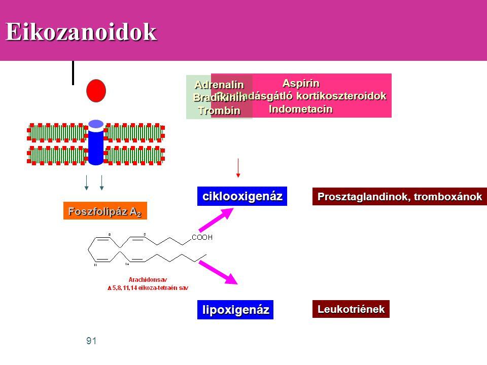 91Eikozanoidok Foszfolipáz A 2 ciklooxigenáz lipoxigenáz Prosztaglandinok, tromboxánok Leukotriének Aspirin Gyulladásgátló kortikoszteroidok Indometac