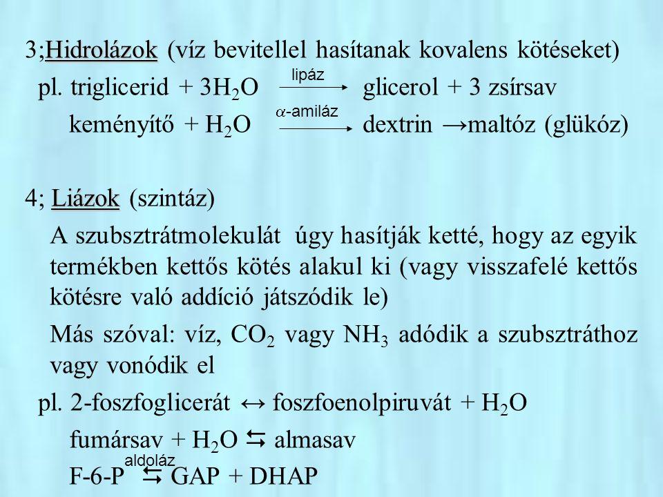 Izomerázok 5; Izomerázok Különböző típusú izomerizációkat (cisz-transz, aldóz- ketóz, stb.) katalizálnak.