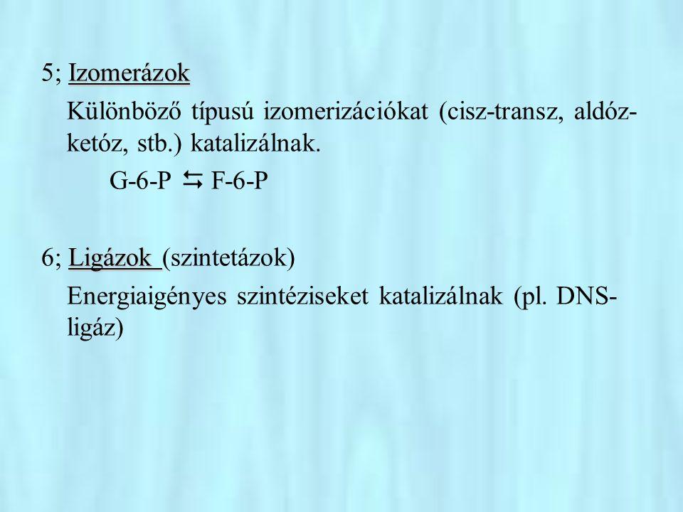 Az enzimreakciók kinetikája •Már a múlt században kimutatták, hogy az enzimreakciók nem egyszerű másodrendű reakciók.