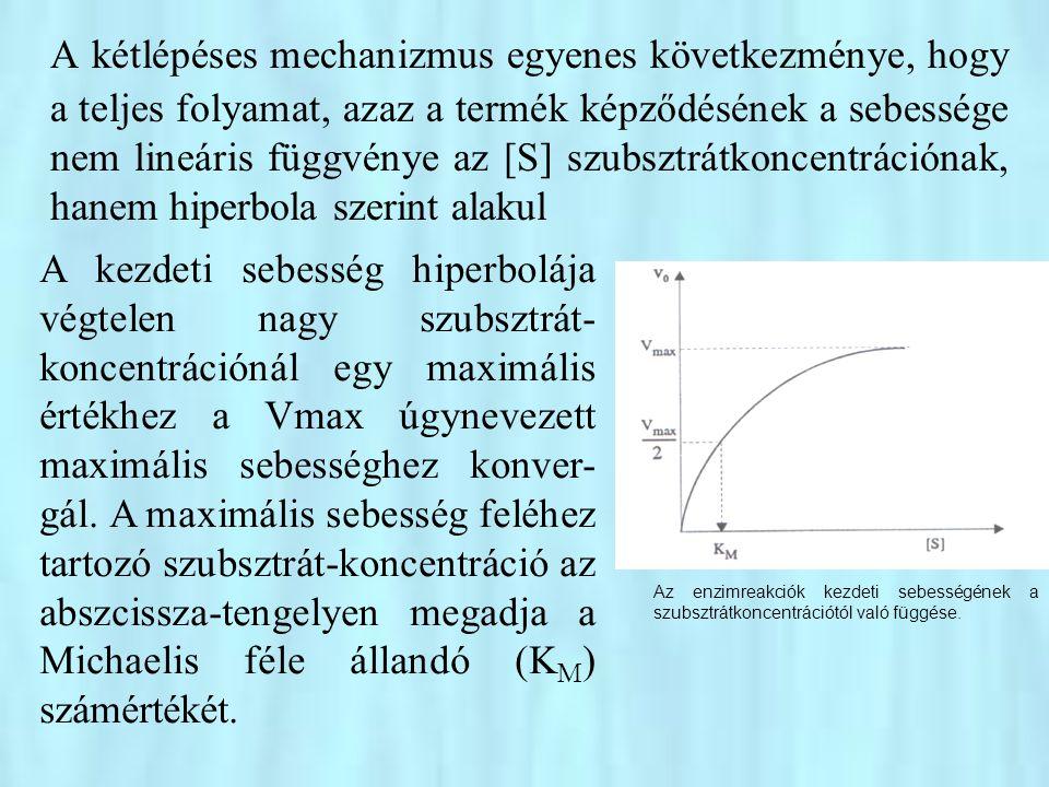 •MICHAELIS és MENTEN elméletüket olyan enzimreakcióra írták le, amelyekben az ES komplex képződésének és visszafelé menő disszociációjának sebessége egyaránt nagyon nagy, sokkal nagyobb, mint a termék képződéséé az ES komplexből, azaz amelyekre nézve K -1 >> k 2