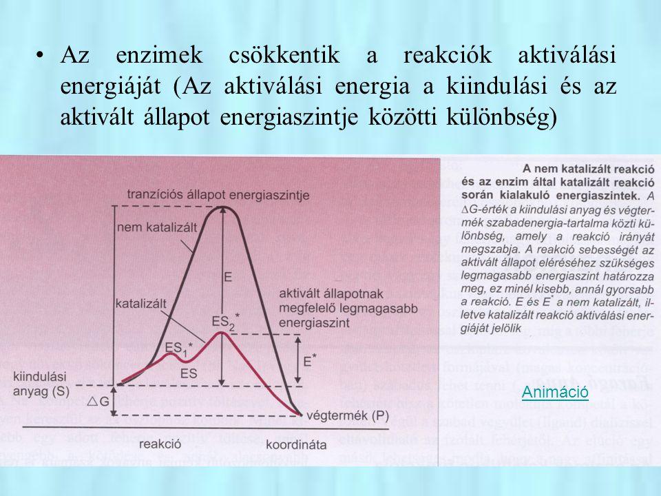 •A szubsztrát(ok) és a végtermék(ek) stabil kémiai szerkezete között az átalakuló molekulának egy ún.