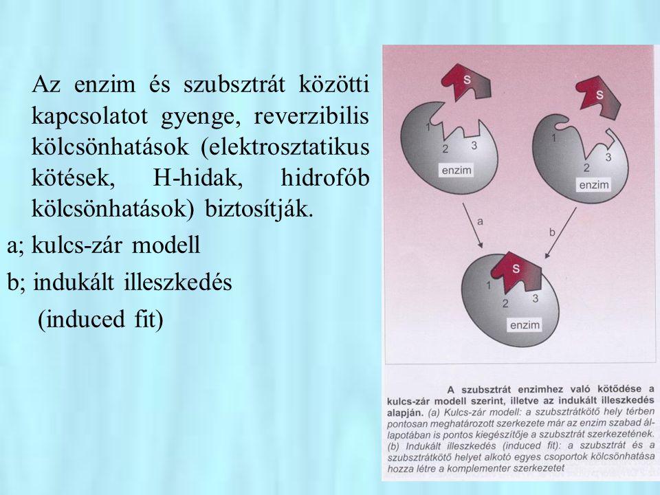 •Néhány toxikus nehézfém (pl.
