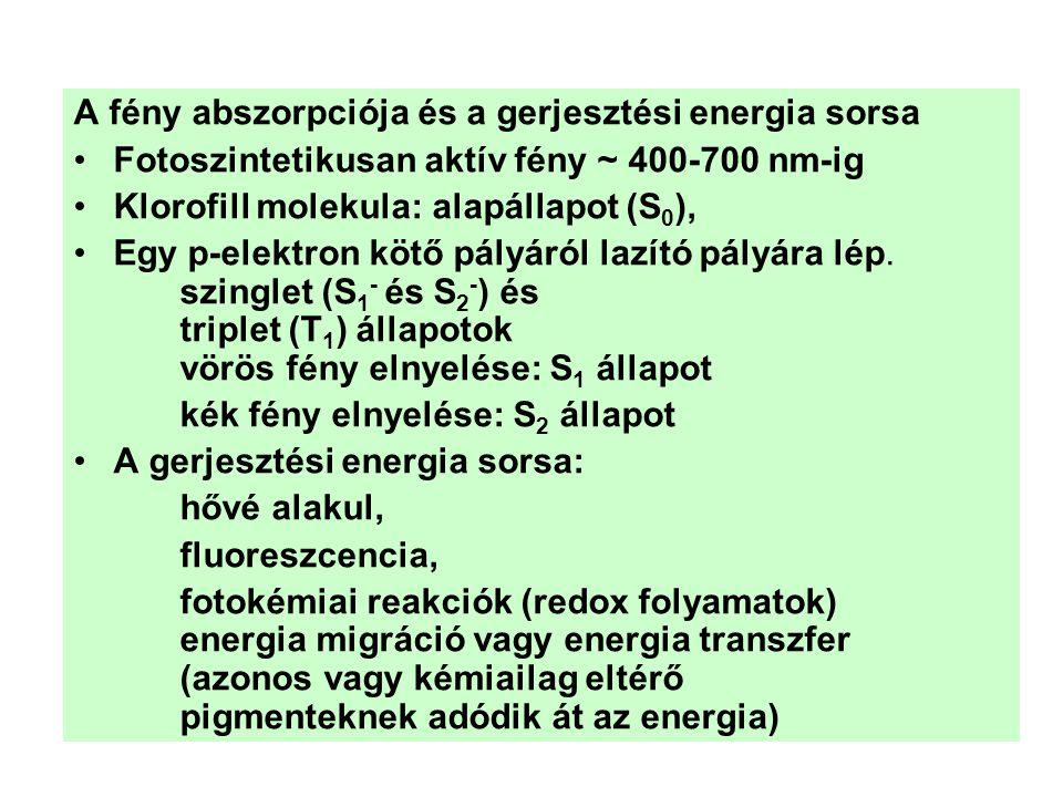A fény abszorpciója és a gerjesztési energia sorsa •Fotoszintetikusan aktív fény ~ 400-700 nm-ig •Klorofill molekula: alapállapot (S 0 ), •Egy p-elekt
