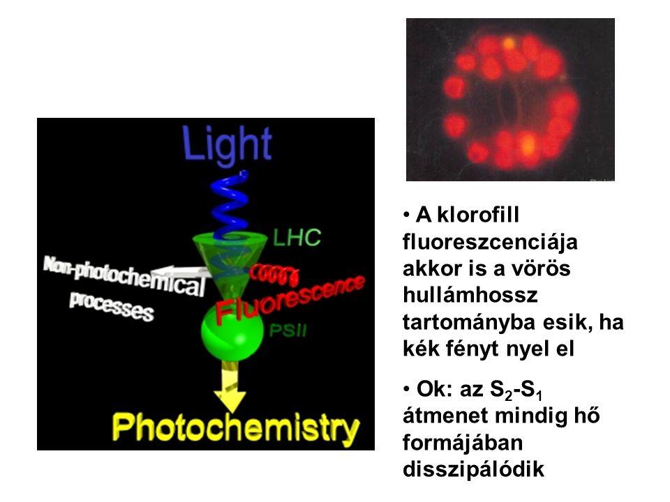 • A klorofill fluoreszcenciája akkor is a vörös hullámhossz tartományba esik, ha kék fényt nyel el • Ok: az S 2 -S 1 átmenet mindig hő formájában diss