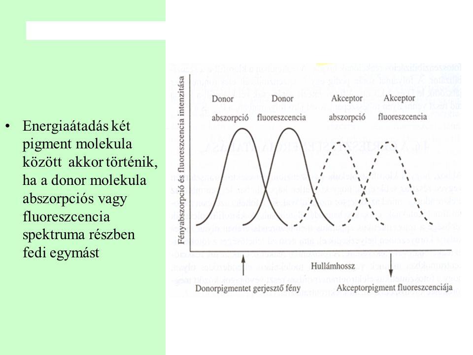 •Energiaátadás két pigment molekula között akkor történik, ha a donor molekula abszorpciós vagy fluoreszcencia spektruma részben fedi egymást