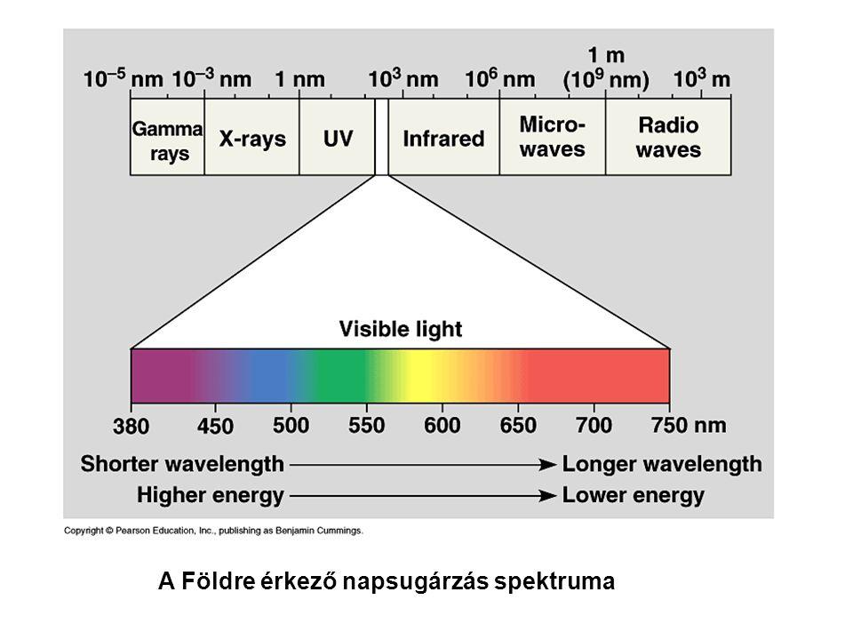 • A klorofill fluoreszcenciája akkor is a vörös hullámhossz tartományba esik, ha kék fényt nyel el • Ok: az S 2 -S 1 átmenet mindig hő formájában disszipálódik