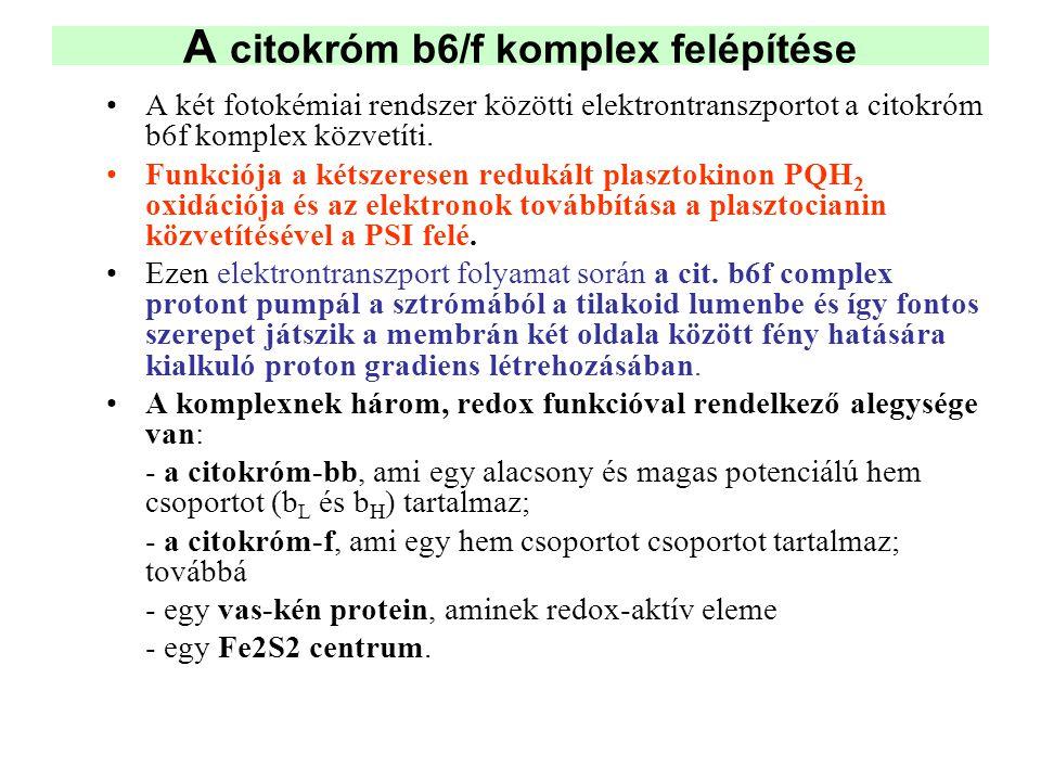 A citokróm b6/f komplex felépítése •A két fotokémiai rendszer közötti elektrontranszportot a citokróm b6f komplex közvetíti. •Funkciója a kétszeresen