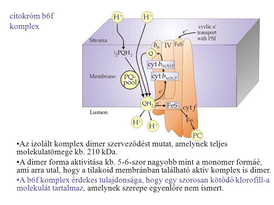 •Az izolált komplex dimer szerveződést mutat, amelynek teljes molekulatömege kb. 210 kDa. •A dimer forma aktivitása kb. 5-6-szor nagyobb mint a monome