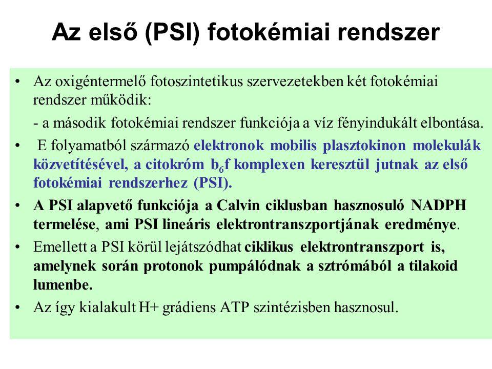 Az első (PSI) fotokémiai rendszer •Az oxigéntermelő fotoszintetikus szervezetekben két fotokémiai rendszer működik: - a második fotokémiai rendszer fu