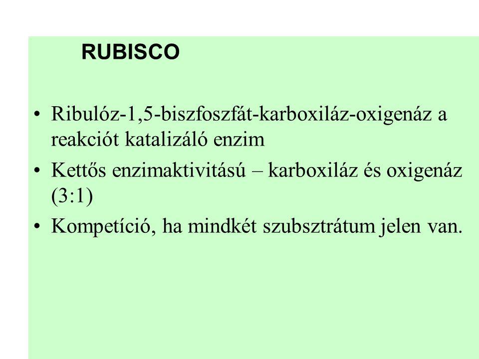 RUBISCO •Ribulóz-1,5-biszfoszfát-karboxiláz-oxigenáz a reakciót katalizáló enzim •Kettős enzimaktivitású – karboxiláz és oxigenáz (3:1) •Kompetíció, h