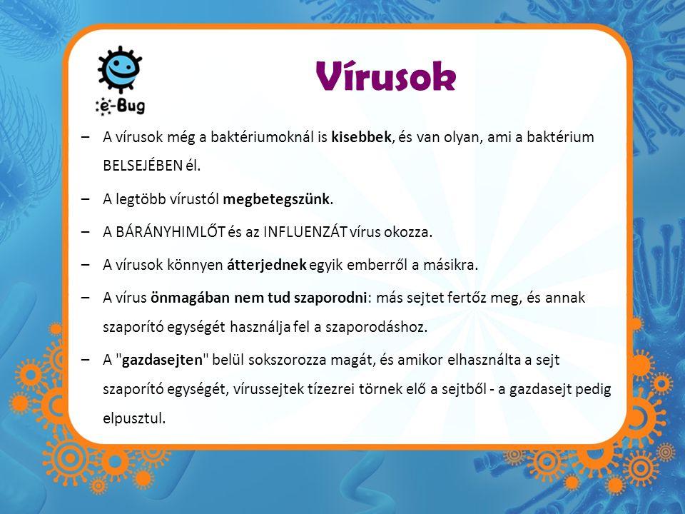 Vírusok –A vírusok még a baktériumoknál is kisebbek, és van olyan, ami a baktérium BELSEJÉBEN él. –A legtöbb vírustól megbetegszünk. –A BÁRÁNYHIMLŐT é