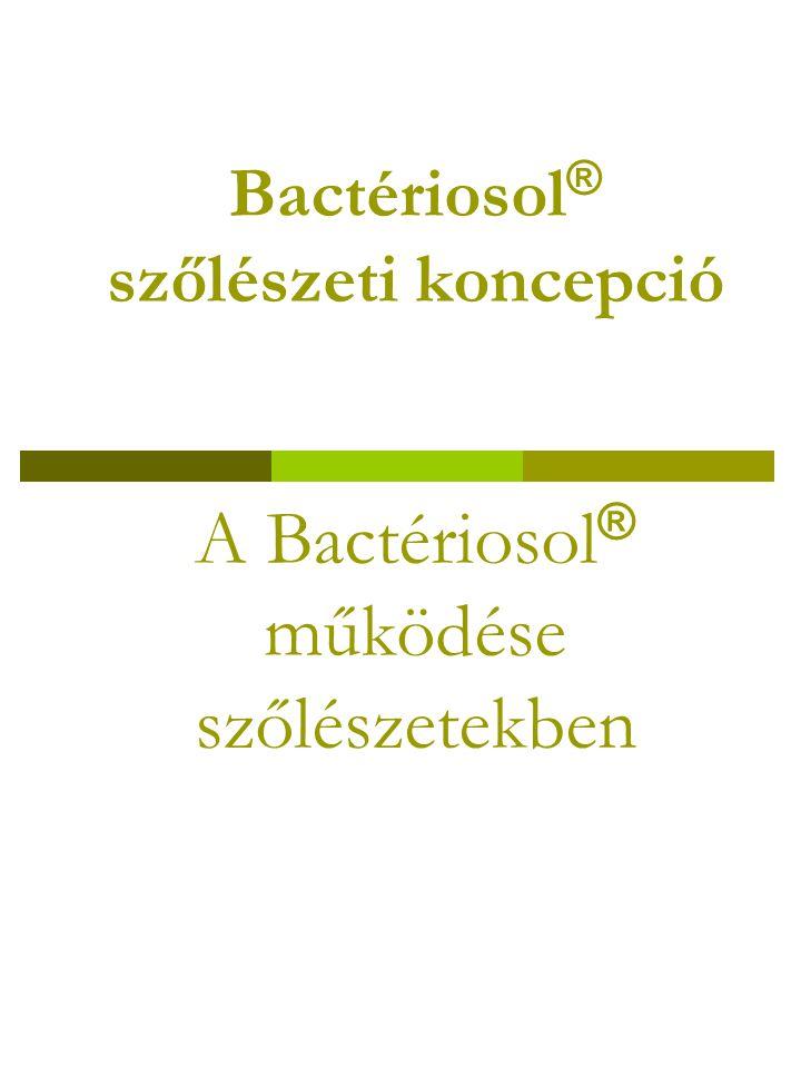 Bactériosol ® szőlészeti koncepció A Bactériosol ® működése szőlészetekben