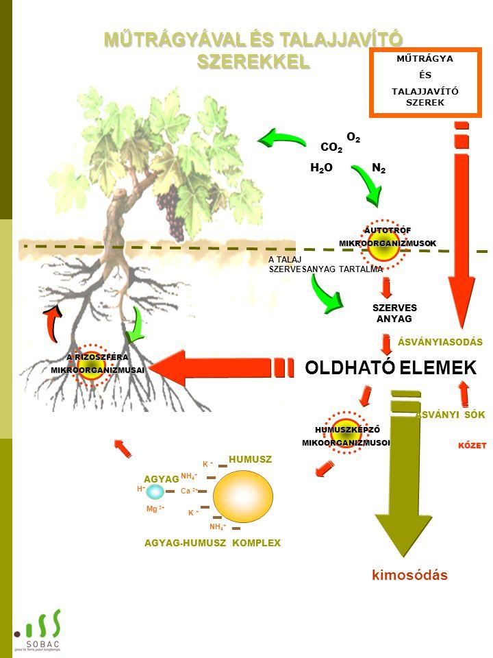 ÁSVÁNYIASODÁS SZERVES ANYAG KŐZET A RIZOSZFÉRA MIKROORGANIZMUSAI AUTOTRÓF MIKROORGANIZMUSOK CO 2 H2OH2O O2O2 N2N2 HUMUSZKÉPZŐMIKOORGANIZMUSOK OLDHATÓ ELEMEK K + NH 4 + Mg 2+ NH 4 + H+H+ K + AGYAG HUMUSZ Ca 2+ AGYAG-HUMUSZ KOMPLEX A TALAJ SZERVESANYAG TARTALMA kimosódás ÁSVÁNYI SÓK MŰTRÁGYA ÉS TALAJJAVÍTÓ SZEREK MŰTRÁGYÁVAL ÉS TALAJJAVÍTÓ SZEREKKEL