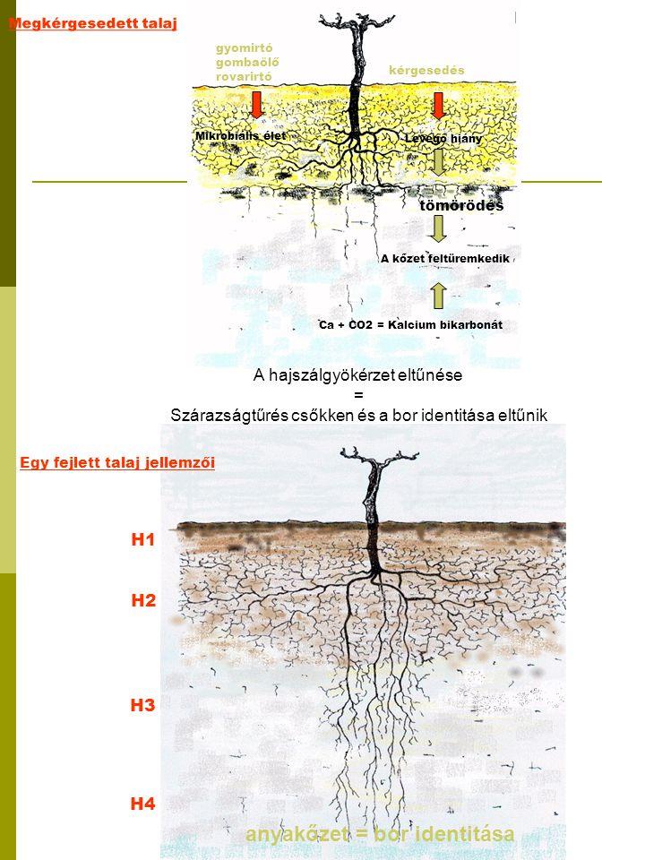 H1 H2 H4 H3 Megkérgesedett talaj gyomirtó gombaölő rovarirtó Mikrobiális élet kérgesedés Levegő hiány tömörödés A kőzet feltüremkedik Ca + CO2 = Kalci