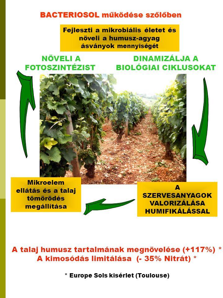 A SZERVESANYAGOK VALORIZÁLÁSA HUMIFIKÁLÁSSAL BACTERIOSOL működése szőlőben A talaj humusz tartalmának megnövelése (+117%) * A kimosódás limitálása (-