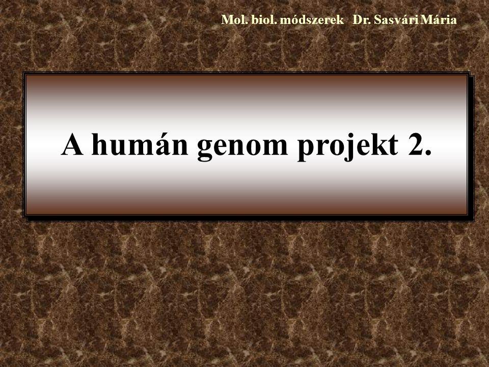 A humán genom projekt 2. Mol. biol. módszerek Dr. Sasvári Mária
