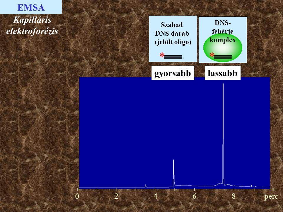 02468perc Kapilláris elektroforézis lassabb EMSA gyorsabb Szabad DNS darab (jelölt oligo) * DNS- fehérje komplex *