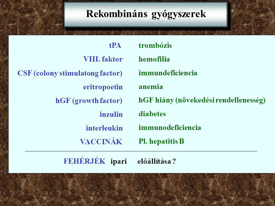 Rekombináns gyógyszerek tPAtrombózis VIII. faktor hemofilia CSF (colony stimulatong factor) immundeficiencia eritropoetin anemia hGF (growth factor) h