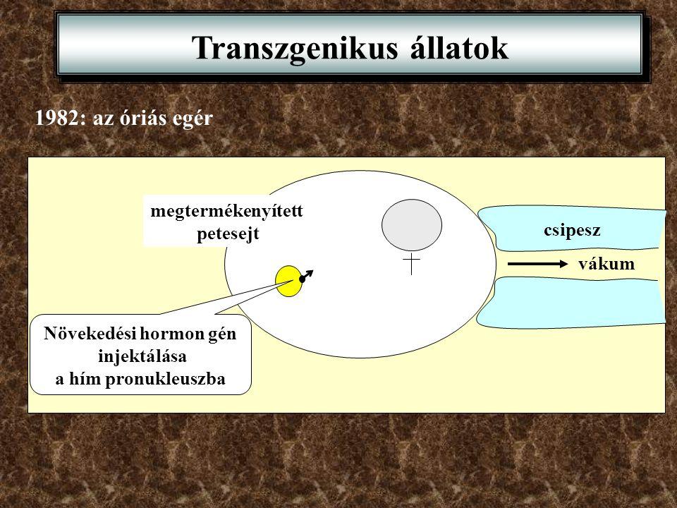 megtermékenyített petesejt vákum csipesz Transzgenikus állatok 1982: az óriás egér Növekedési hormon gén injektálása a hím pronukleuszba