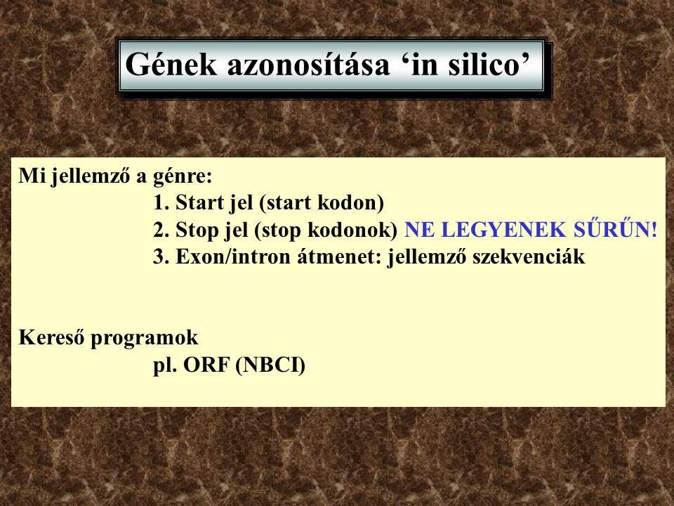 Gének azonosítása 'in silico' Mi jellemző a génre: 1. Start jel (start kodon) 2. Stop jel (stop kodonok) NE LEGYENEK SŰRŰN! 3. Exon/intron átmenet: je
