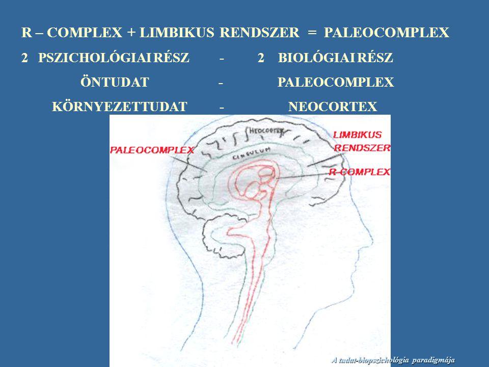 R – COMPLEX + LIMBIKUS RENDSZER = PALEOCOMPLEX 2 PSZICHOLÓGIAI RÉSZ - 2 BIOLÓGIAI RÉSZ ÖNTUDAT - PALEOCOMPLEX KÖRNYEZETTUDAT - NEOCORTEX A tudat-biopszichológia paradigmája