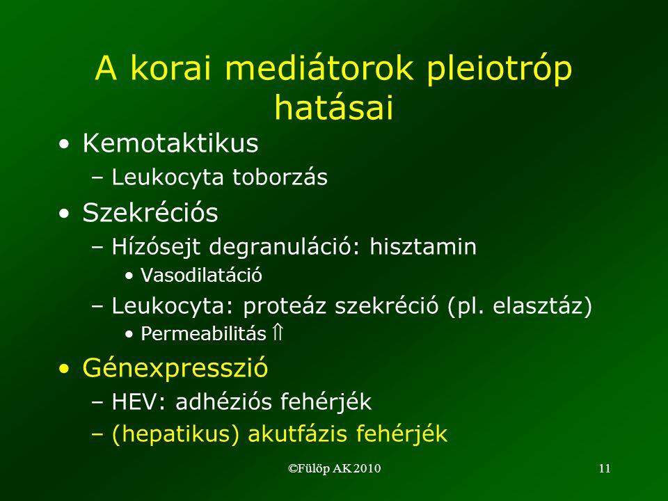 ©Fülöp AK 201011 A korai mediátorok pleiotróp hatásai •Kemotaktikus –Leukocyta toborzás •Szekréciós –Hízósejt degranuláció: hisztamin •Vasodilatáció –Leukocyta: proteáz szekréció (pl.