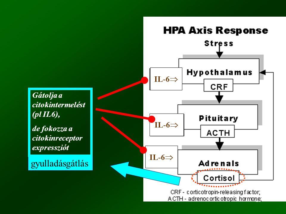 25 gyulladásgátlás IL-6  Gátolja a citokintermelést (pl IL6), de fokozza a citokinreceptor expressziót