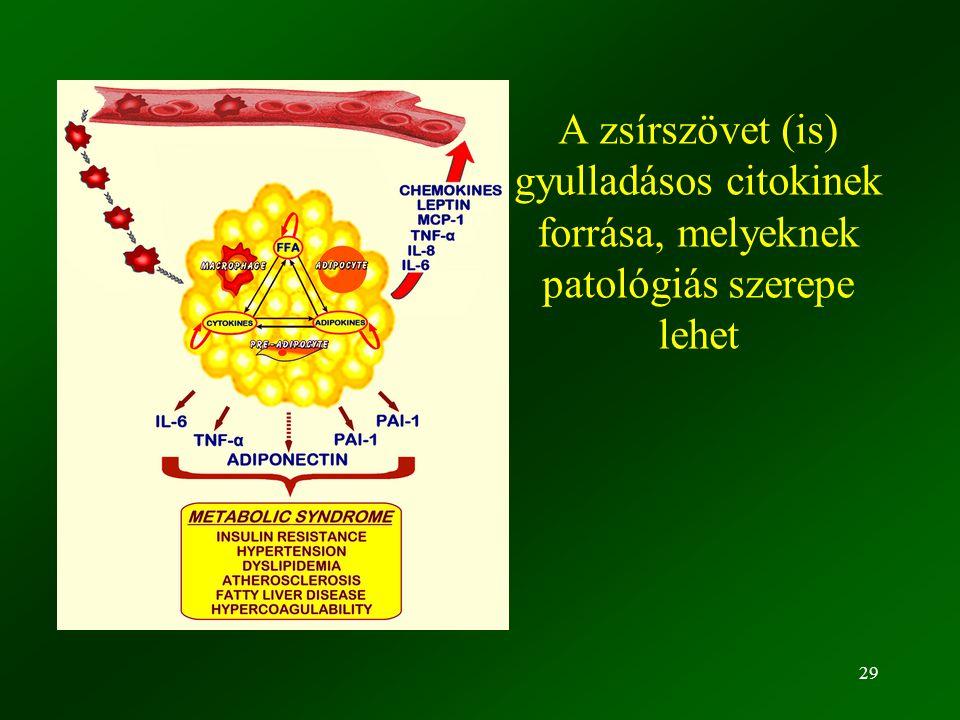 29 A zsírszövet (is) gyulladásos citokinek forrása, melyeknek patológiás szerepe lehet