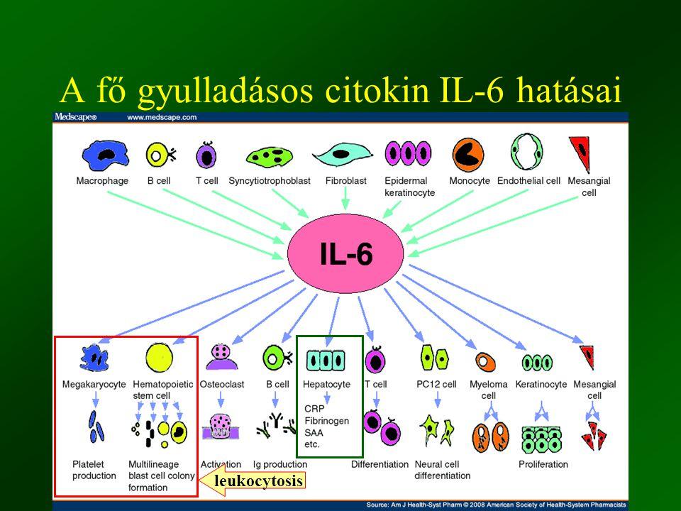 ©Fülöp AK 201030 A fő gyulladásos citokin IL-6 hatásai leukocytosis