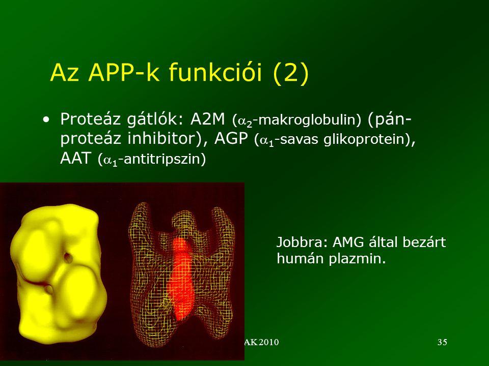 ©Fülöp AK 201035 •Proteáz gátlók: A2M ( 2 -makroglobulin) (pán- proteáz inhibitor), AGP ( 1 -savas glikoprotein), AAT ( 1 -antitripszin) Az APP-k funkciói (2) Jobbra: AMG által bezárt humán plazmin.