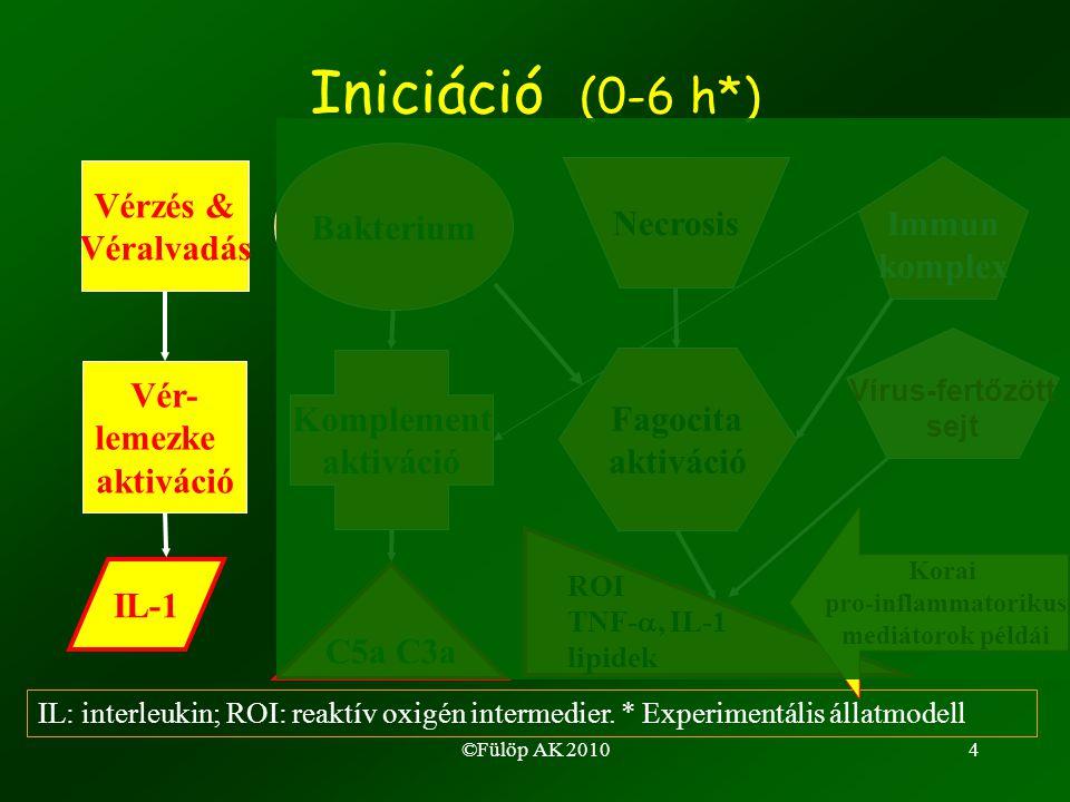 ©Fülöp AK 20104 Iniciáció (0-6 h*) Immun komplex Vérzés & Véralvadás Vér- lemezke aktiváció IL-1 Bakterium Komplement aktiváció C5a C3a Necrosis Fagocita aktiváció ROI TNF- , IL-1 lipidek IL: interleukin; ROI: reaktív oxigén intermedier.