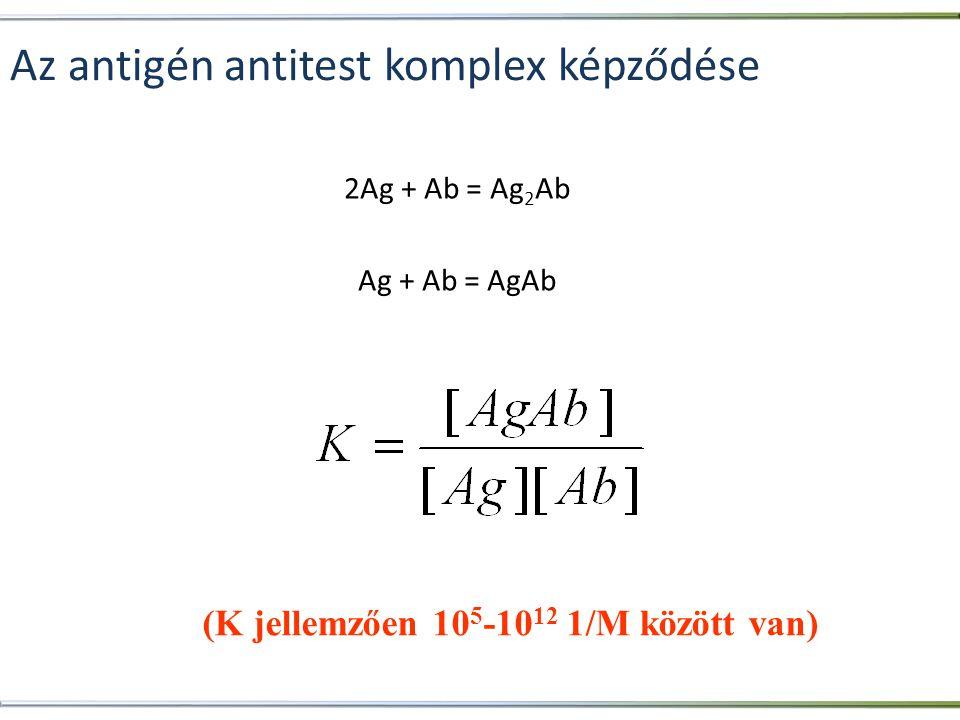 Az antigén antitest komplex képződése 2Ag + Ab = Ag 2 Ab Ag + Ab = AgAb (K jellemzően 10 5 -10 12 1/M között van)