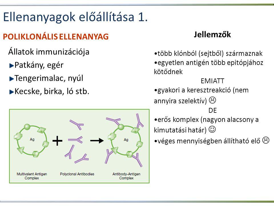 Ellenanyagok előállítása 1. Állatok immunizációja Patkány, egér Tengerimalac, nyúl Kecske, birka, ló stb. Jellemzők •több klónból (sejtből) származnak