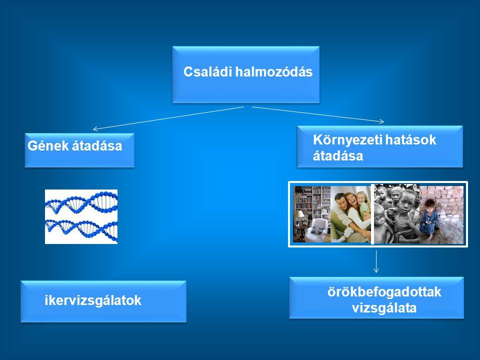 ikervizsgálatok örökbefogadottak vizsgálata Családi halmozódás Környezeti hatások átadása Gének átadása