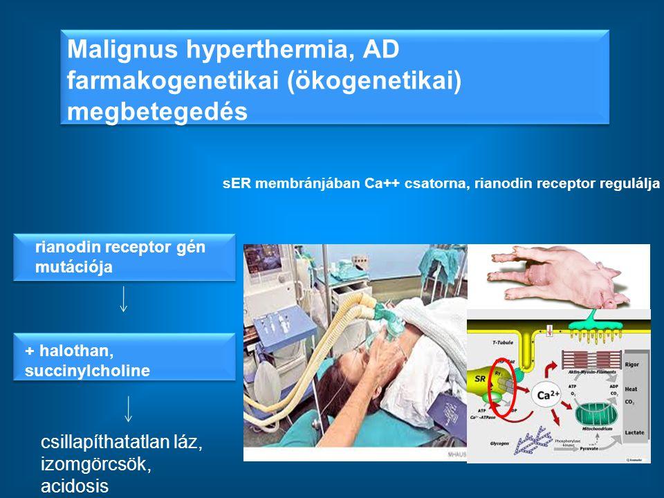 Malignus hyperthermia, AD farmakogenetikai (ökogenetikai) megbetegedés sER membránjában Ca++ csatorna, rianodin receptor regulálja rianodin receptor g