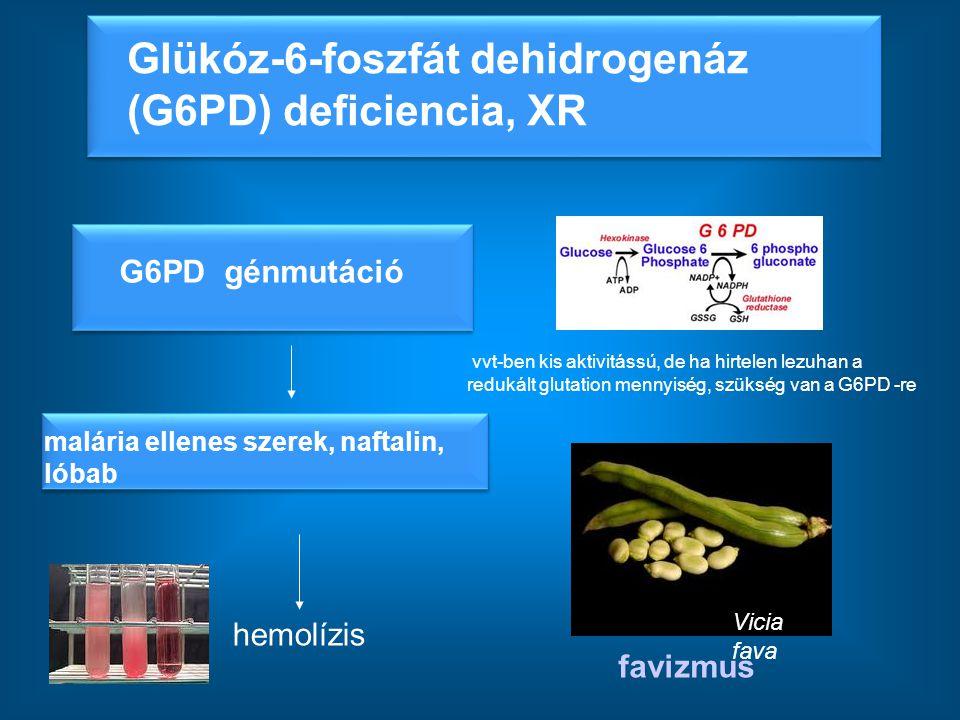 hemolízis favizmus malária ellenes szerek, naftalin, lóbab Glükóz-6-foszfát dehidrogenáz (G6PD) deficiencia, XR vvt-ben kis aktivitássú, de ha hirtele