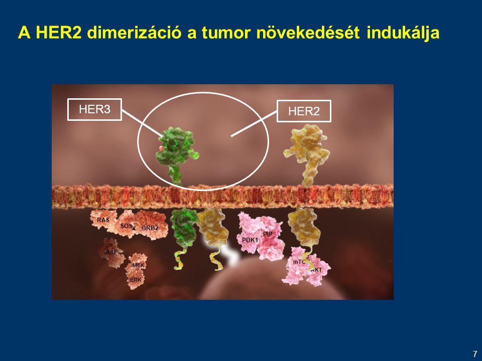 7 A HER2 dimerizáció a tumor növekedését indukálja MEK ERK RAF RAS SOS GRB2 PIP PDK1 AKT mTOR HER3 HER2