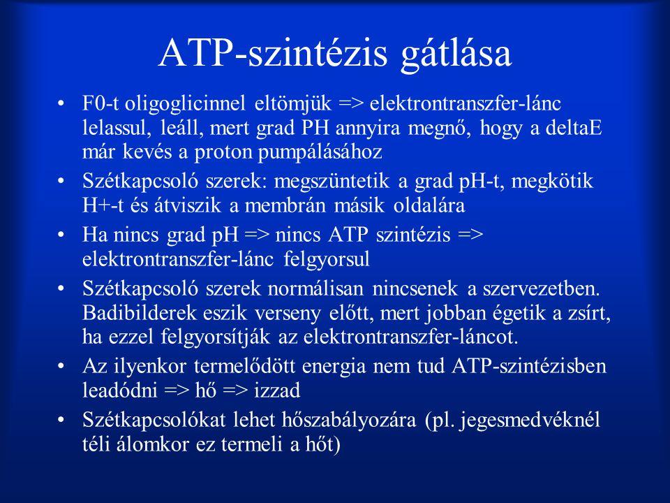 ATP-szintézis gátlása •F0-t oligoglicinnel eltömjük => elektrontranszfer-lánc lelassul, leáll, mert grad PH annyira megnő, hogy a deltaE már kevés a p