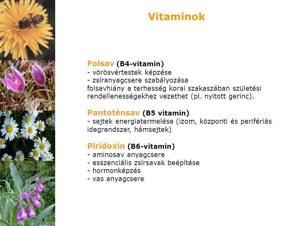 Folsav (B4-vitamin) - vörösvértestek képzése - zsíranyagcsere szabályozása folsavhiány a terhesség korai szakaszában születési rendellenességekhez vez
