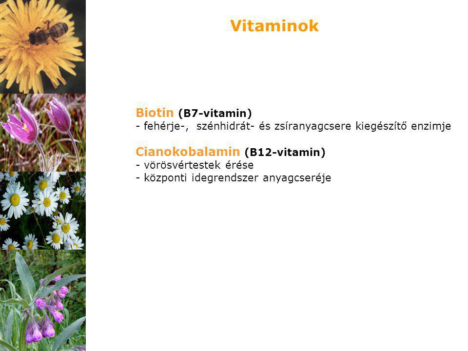 Biotin (B7-vitamin) - fehérje-, szénhidrát- és zsíranyagcsere kiegészítő enzimje Cianokobalamin (B12-vitamin) - vörösvértestek érése - központi idegre