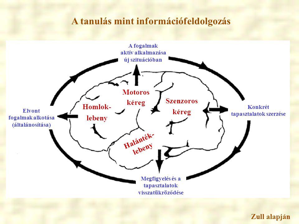 A tanulás mint információfeldolgozás Zull alapján Konkrét tapasztalatok szerzése Megfigyelés és a tapasztalatok visszatükröződése Elvont fogalmak alko