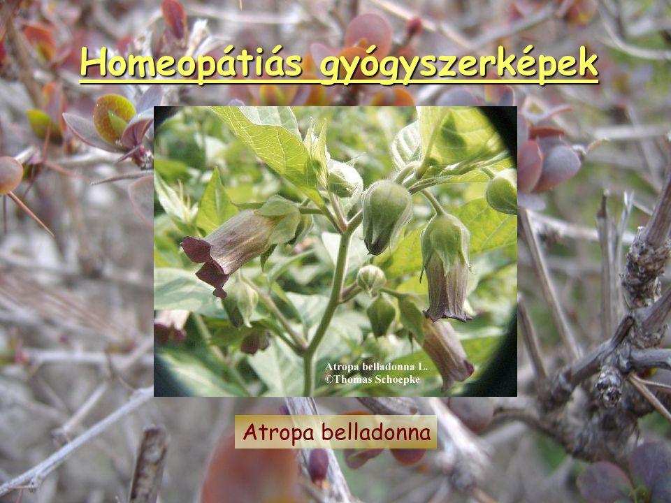 Homeopátiás gyógyszerképek Apis mellifica
