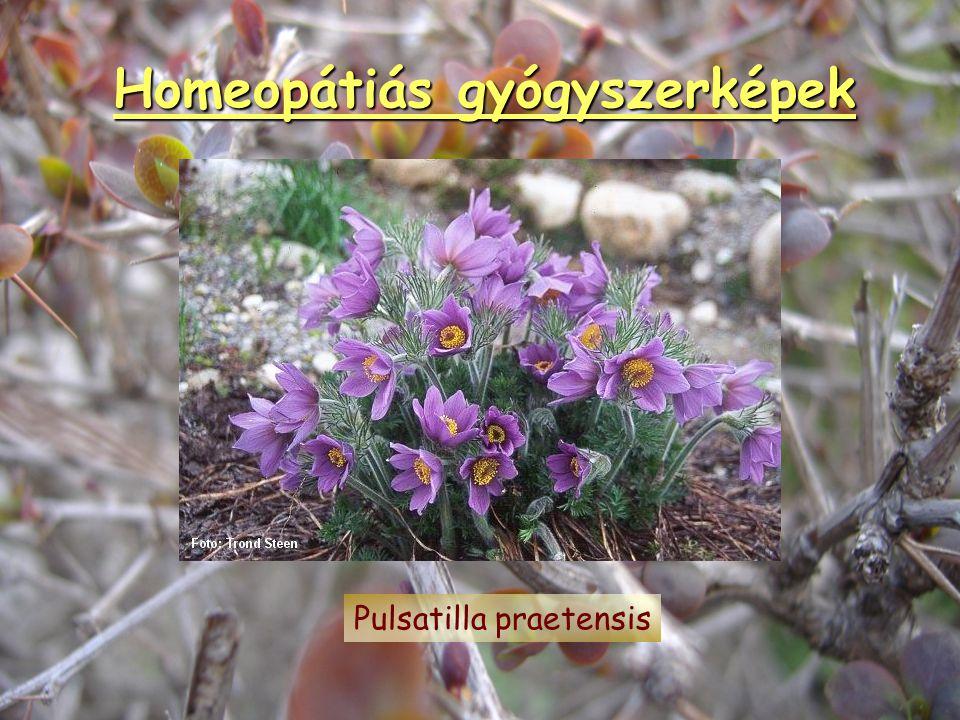Homeopátiás gyógyszerképek Arsenicum album