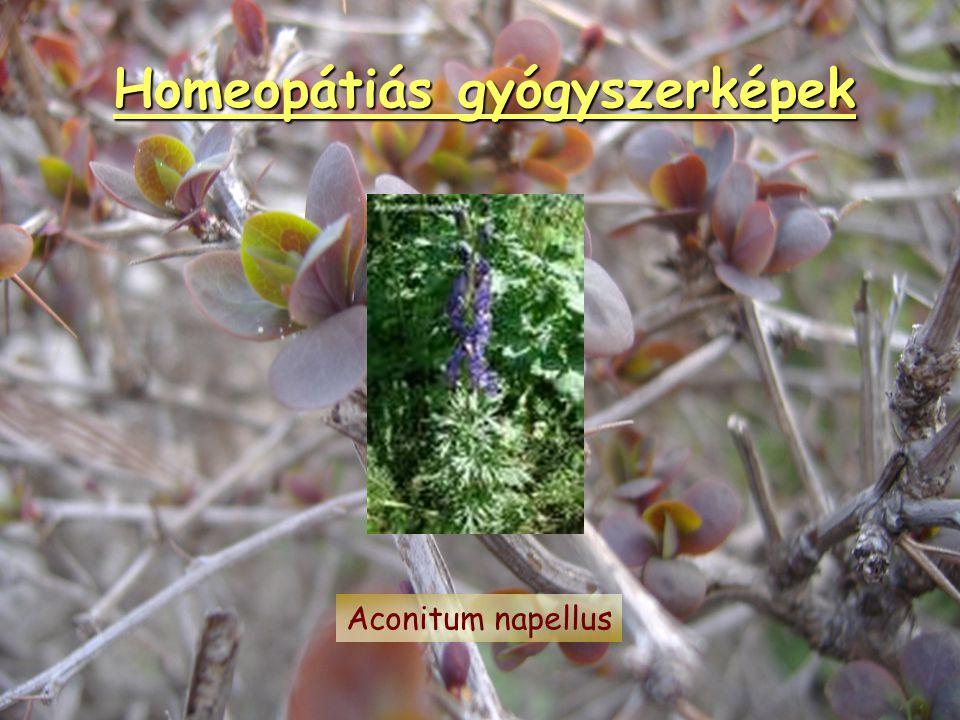 Homeopátiás gyógyszerképek Phosphorus