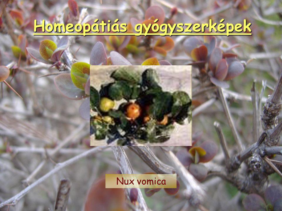 Homeopátiás gyógyszerképek Sulfur