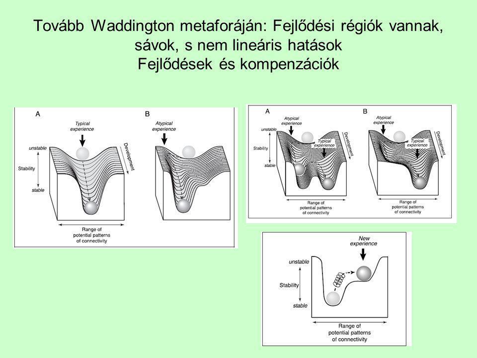 Tovább Waddington metaforáján: Fejlődési régiók vannak, sávok, s nem lineáris hatások Fejlődések és kompenzációk