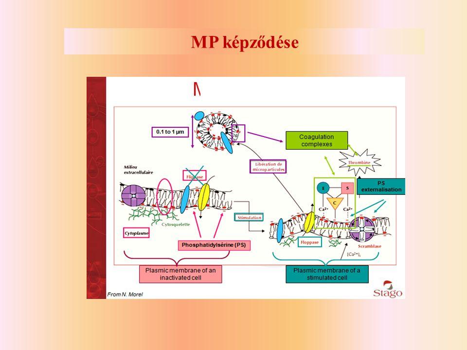 MP képződése
