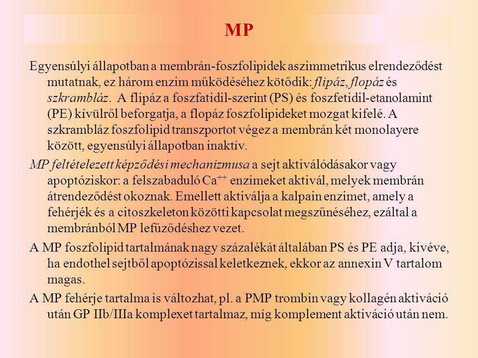 MP Egyensúlyi állapotban a membrán-foszfolipidek aszimmetrikus elrendeződést mutatnak, ez három enzim működéséhez kötődik: flipáz, flopáz és szkramblá