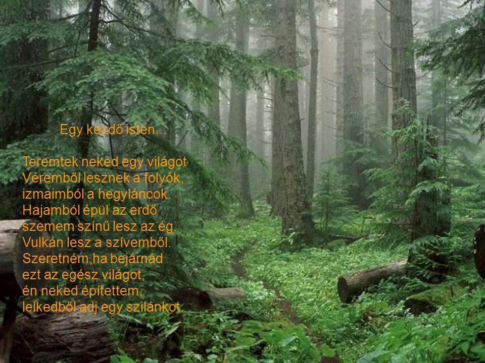 Nyírfa... Egyszer nyírfát ültettem. Nyírfa helyett vers hajtott ki a földből, zúg a versszakok lombja fogalmam sincs róla hogy történt mindez. Azóta h