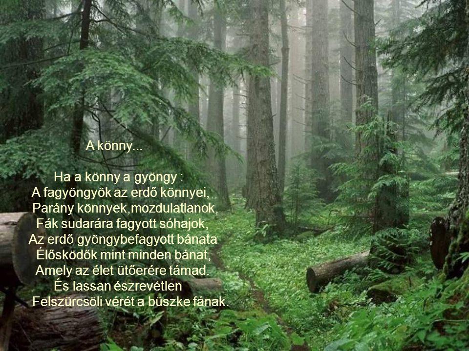 Ha az erdő... Ha az erdő besötétül, sűrűbe visz be az út, nem látjuk,hogy utunk végül a sötétbe hova jut. Ha az erdő fája ritkul, nyílik az ég,süt a n